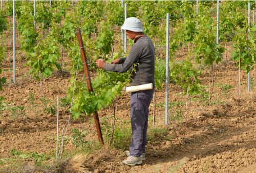 Нисколихвени Кредити за Земеделски Производители